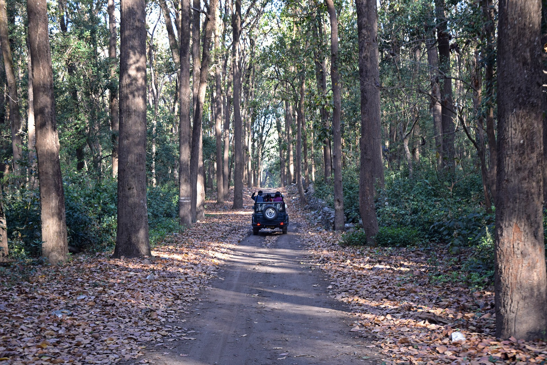 Jungle safari in Rishikesh